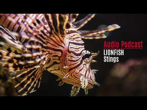 Lionfish Stings