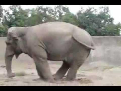 Los animales más graciosos en la web