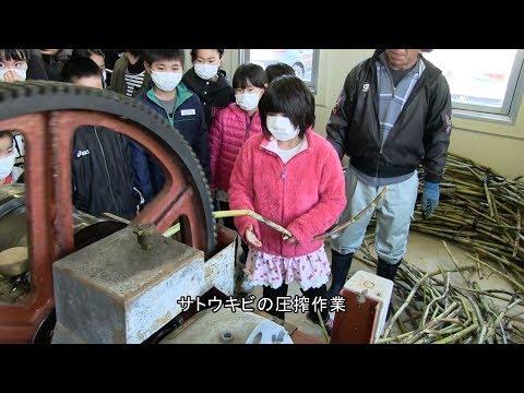 種子島の学校活動:安納小学校黒糖づくり体験2018年