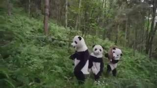 Documentary Pandas  The Journey Home