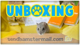 Hamster Mail Unboxing | New Monthly Subscription Box Service! by ErinsAnimals