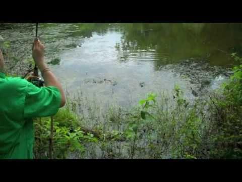 small pond fishing!