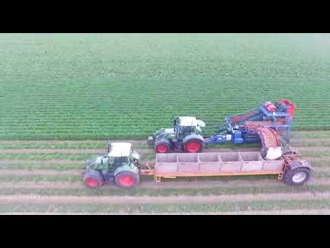 ASA-LIFT carrot harvest T-255