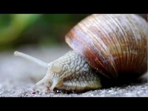 snails - True facts about the kinkiest animal in the world... the land snail. seriously... Post to Facebook :: http://on.fb.me/11IIxhG Tweet This :: http://bit.ly/16z...