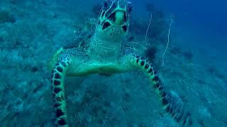 「お願い、コレ取ってくれませんか?」とダイバーに頼みに来たウミガメ