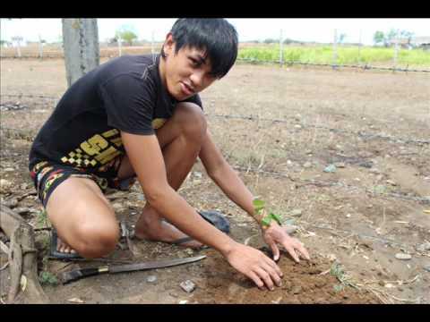 How to plant a GUYABANO!