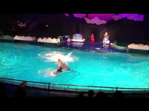 דולפינריום - הופעת הדולפינים בהולנד.