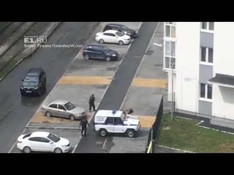 В Екатеринбурге полицейский расстрелял овчарку, которая покусала четверых прохожих