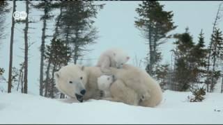 El fotógrafo de los osos polares | Euromaxx