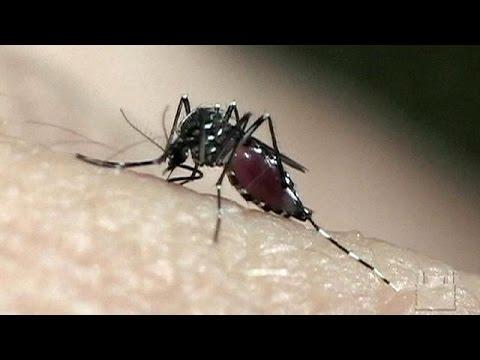 Γενετικά τροποποιημένα κουνούπια στη μάχη ενάντια στον ιό Ζίκα – science