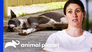 Lizzy And Moe Rescue Dog Who Is Too Sick To Move | Pit Bulls & Parolees by Animal Planet
