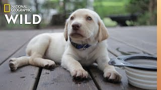 See the Ways Your Dog Tells You What It Wants | Nat Geo Wild by Nat Geo WILD