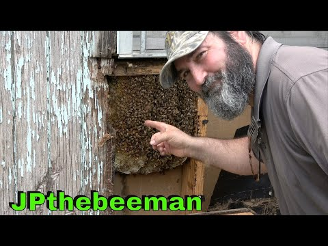 Saving Dee's Honey Bees