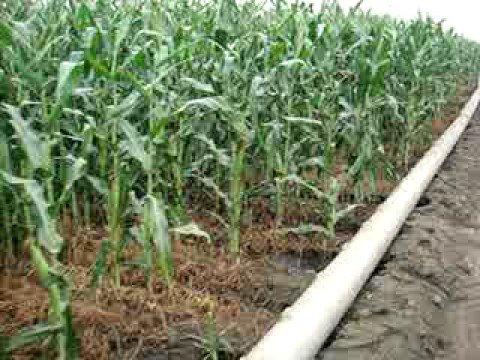 Irrigacao por gravidade no estado de Nebraska