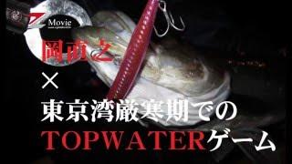 東京湾厳寒期でのTOPWATERゲーム(岡 直之)