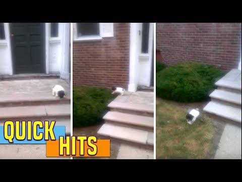 不敢下台階的小狗狗發現主人不幫自己後,牠想出的脫困方法讓大家融化了還在笑!