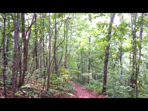 241 acres Ashland, AL