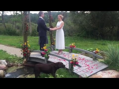 Stray Dog Crashes Outdoor Wedding