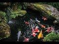 simple filter koi pond - filter kolam ikan sederhana