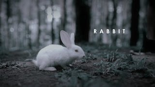 Video Rabbit. MP3, 3GP, MP4, WEBM, AVI, FLV Februari 2018