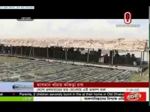 Crab cultivation in small cages (23-09-2016)
