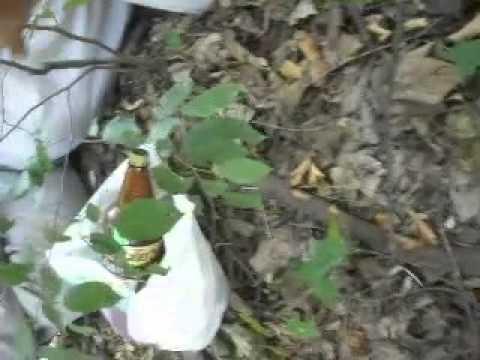 Директор однієї із шкіл на Рівненщині лежав п'яним посеред села [ВІДЕО]