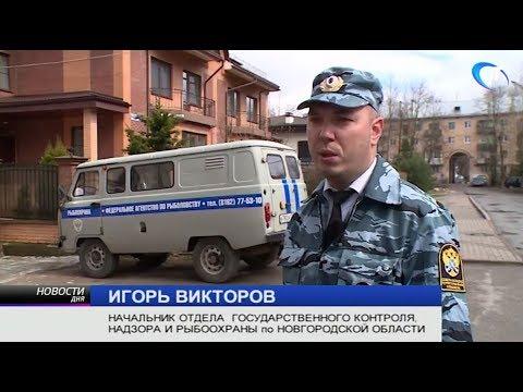 В деятельности рыбодобывающего предприятия Старорусского района Новгородской области обнаружены серьезные нарушения