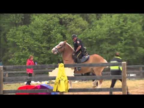 Mounted Police Training (видео)