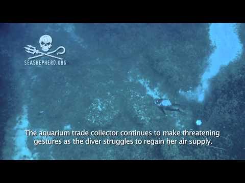 Reef Defense Underwater Attack