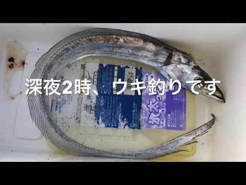 【満員・大盛況】南芦屋浜リアルタイム
