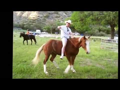 Download 2013 Funniest Horse Video Contest Winners HD Mp4 3GP Video and MP3