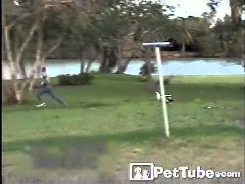 Duck Takes Down Boy