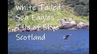 Isle Of Skye United Kingdom  city images : Sea Eagle - Isle of Skye - Scotland, UK, nature, birds, birdwatching