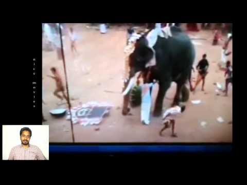 Video elephant attack in manissery download in MP3, 3GP, MP4, WEBM, AVI, FLV January 2017