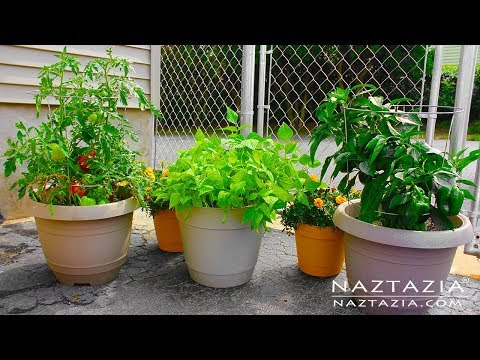 Learn How to Garden for Beginners – Container Gardening – Urban Rooftop Porch Patio Balcony