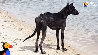何が何でも連れて帰るよ!アマゾンの真っただ中に取り残されていた犬を保護した男性がいた