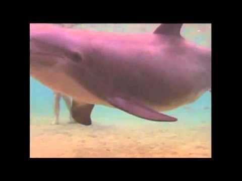 Raw Video: Dolphin Gives Birth in Hawaii