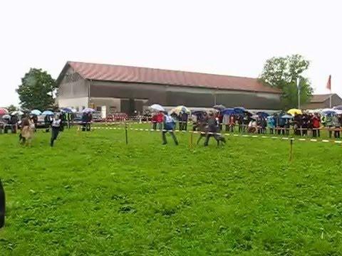 Eselrennen in Holzhausen am 4. Juni 2006