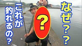 マゴチ釣りをしていたら超意外なアレが釣れた!!
