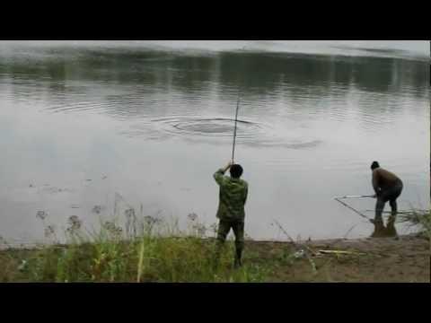 ловля сазана в сентябре на волге