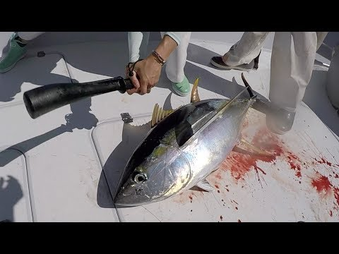 She BEAT It With A Bat... Here's WHY - Catch Clean Cook -Yellowfin Tuna