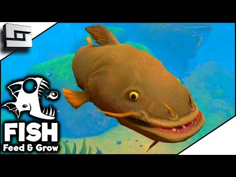 Catfish river fish feed and grow games for Feed and grow fish online