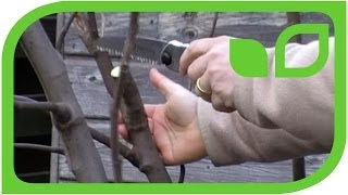 #62 Wie müssen Feigen geschnitten werden?