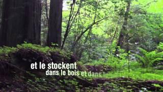 Journée internationale des forêts 2015