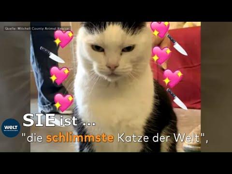 Schlimmste Katze der Welt: Verzweifeltes Tierheim will ...