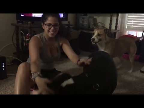 Girl And Dog Have Fun Time