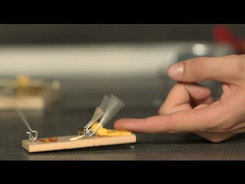 Mouse Trap Finger Challenge &#8211; The Slow Mo Guys