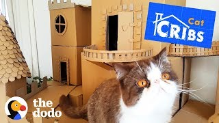 The World's Most Epic Cat Cribs   The Dodo by The Dodo