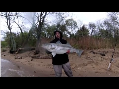 Delaware River Striper Fishing – Spring 2014