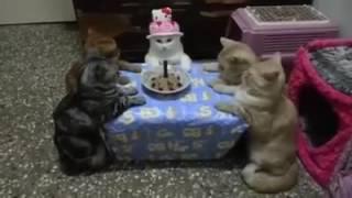 4 قطط تحتفل بعيد ميلاد شقيقتها